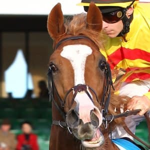 Galileo Rock Great Odds To Win St. Leger 2013