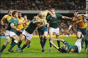 Wallabies And Springboks Odds