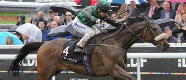 Clever Cookie racehorse